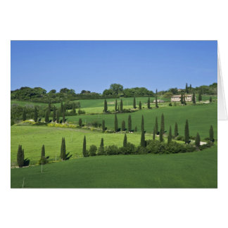 Italy, Tuscany, Multepulciano. Cypress trees Greeting Card
