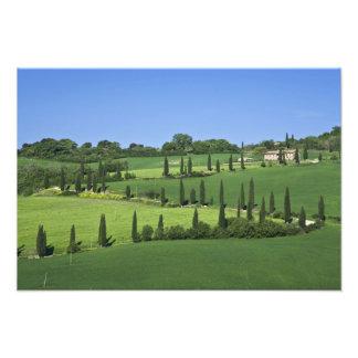 Italy, Tuscany, Multepulciano. Cypress trees Photograph