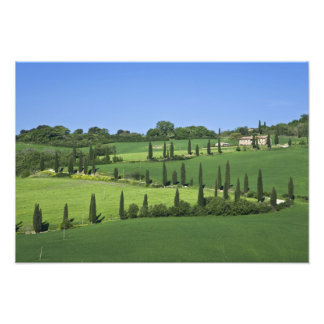 Italy, Tuscany, Multepulciano. Cypress trees Photo Print
