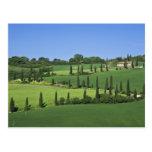 Italy, Tuscany, Multepulciano. Cypress trees Postcard