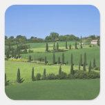Italy, Tuscany, Multepulciano. Cypress trees Square Stickers