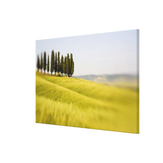 Italy Tuscany, Selective Focus Cypress Trees Canvas Print