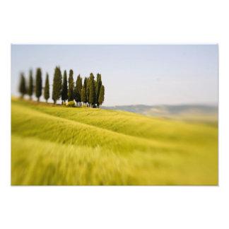 Italy Tuscany, Selective Focus Cypress Trees Photo Print
