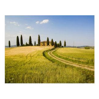Italy, Tuscany, Tuscan Villa nearing Harvest. Postcard