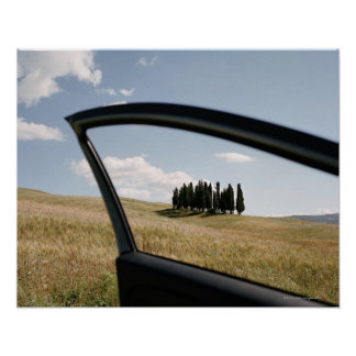 Italy,Tuscany,Val d'Orcia,Cypress trees in the Poster