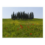 Italy, Tuscany, Val D'Orcia, Landscape