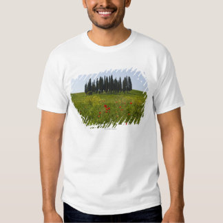 Italy, Tuscany, Val D'Orcia, Landscape Tshirts