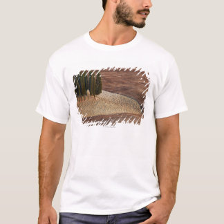 Italy,Tuscany,Val d'Orcia,San Quirico d'Orcia T-Shirt