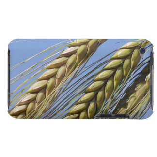 Italy, Tuscany, Val d'Orcia, Three ears of iPod Touch Covers