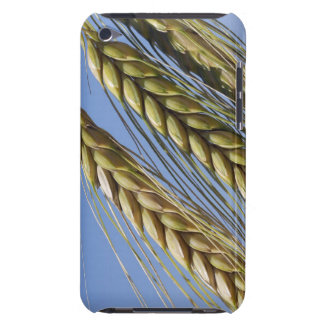 Italy, Tuscany, Val d'Orcia, Three ears of iPod Touch Cases