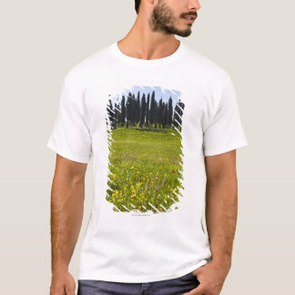 Italy, Tuscany, Val D'Orcia, Trees on meadow T-Shirt