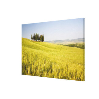 Italy, Tuscnay, Grouping of Tuscan Cypress 2 Canvas Print