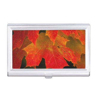 Itasca State Park, Fall Colors 2 Business Card Holder