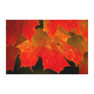 Itasca State Park, Fall Colors 2 Stretched Canvas Prints