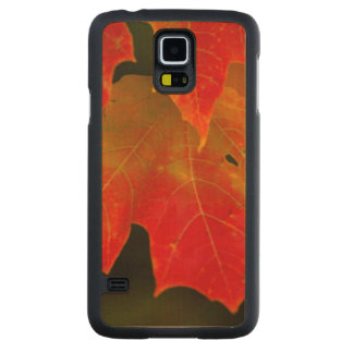 Itasca State Park, Fall Colors 2 Carved Maple Galaxy S5 Case