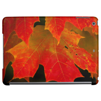 Itasca State Park, Fall Colors 2 Case For iPad Air
