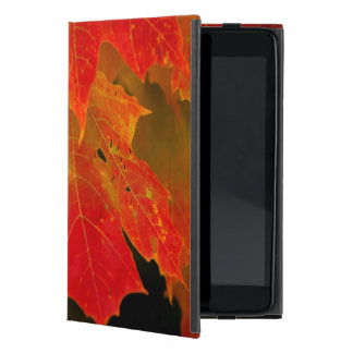 Itasca State Park, Fall Colors 2 Cover For iPad Mini