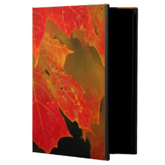 Itasca State Park, Fall Colors 2 iPad Air Covers