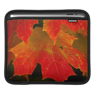 Itasca State Park, Fall Colors 2 iPad Sleeve