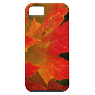 Itasca State Park, Fall Colors 2 iPhone 5 Case