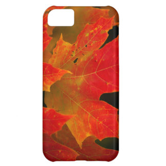 Itasca State Park, Fall Colors 2 iPhone 5C Case