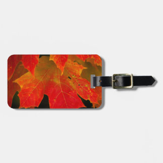 Itasca State Park, Fall Colors 2 Luggage Tag