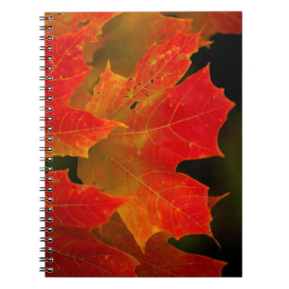 Itasca State Park, Fall Colors 2 Notebooks