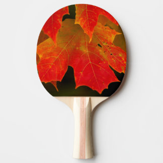 Itasca State Park, Fall Colors 2 Ping Pong Paddle