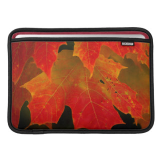 Itasca State Park, Fall Colors 2 Sleeve For MacBook Air