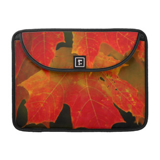 Itasca State Park, Fall Colors 2 Sleeve For MacBook Pro