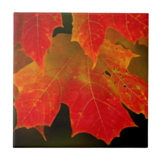 Itasca State Park, Fall Colors 2 Small Square Tile