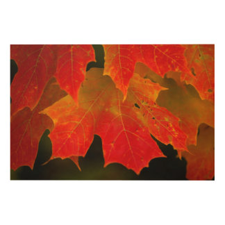 Itasca State Park, Fall Colors 2 Wood Prints