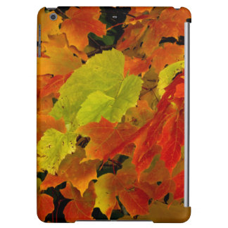 Itasca State Park, Fall Colors Case For iPad Air