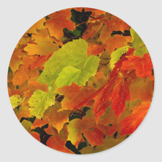 Itasca State Park, Fall Colors Classic Round Sticker