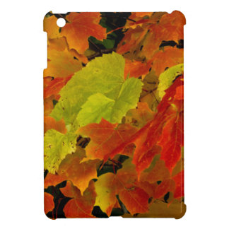 Itasca State Park, Fall Colors Cover For The iPad Mini
