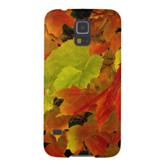 Itasca State Park, Fall Colors Galaxy S5 Cover