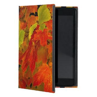Itasca State Park, Fall Colors iPad Mini Cover