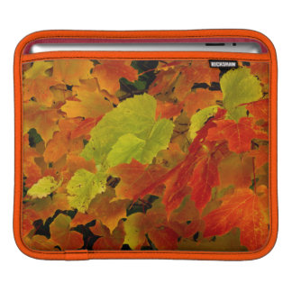 Itasca State Park, Fall Colors iPad Sleeve