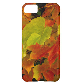 Itasca State Park, Fall Colors iPhone 5C Case