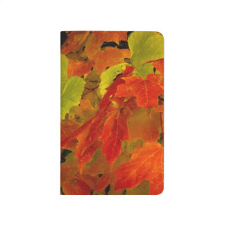 Itasca State Park, Fall Colors Journal