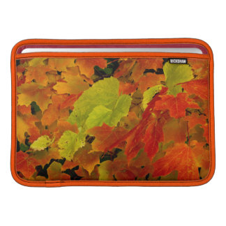 Itasca State Park, Fall Colors MacBook Sleeve