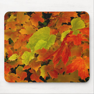 Itasca State Park, Fall Colors Mouse Mat