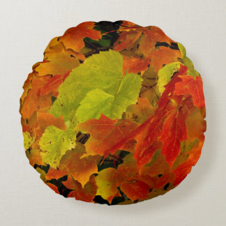 Itasca State Park, Fall Colors Round Cushion