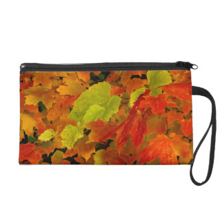 Itasca State Park, Fall Colors Wristlet