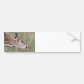 Itchy Fawn Bumper Sticker