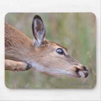Itchy Fawn Mouse Pad
