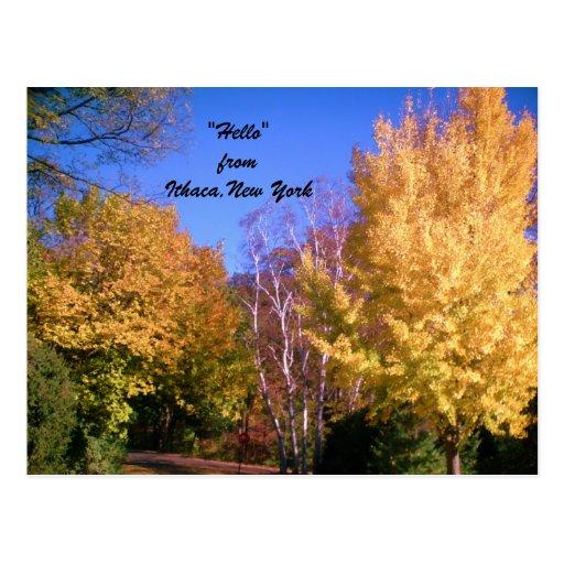 ITHACA NEW YORK IN AUTUMN postcard