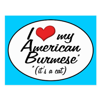 It's a Cat! I Love My American Burmese Postcard