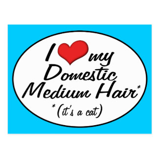It's a Cat! I Love My Domestic Medium Hair Postcard