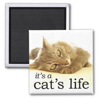 It's a Cat's Life - Magnet